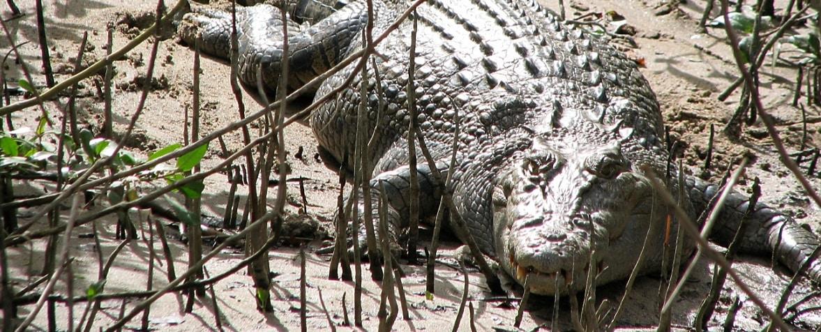 Eco-crocodile cruise glides into Hall of Fame