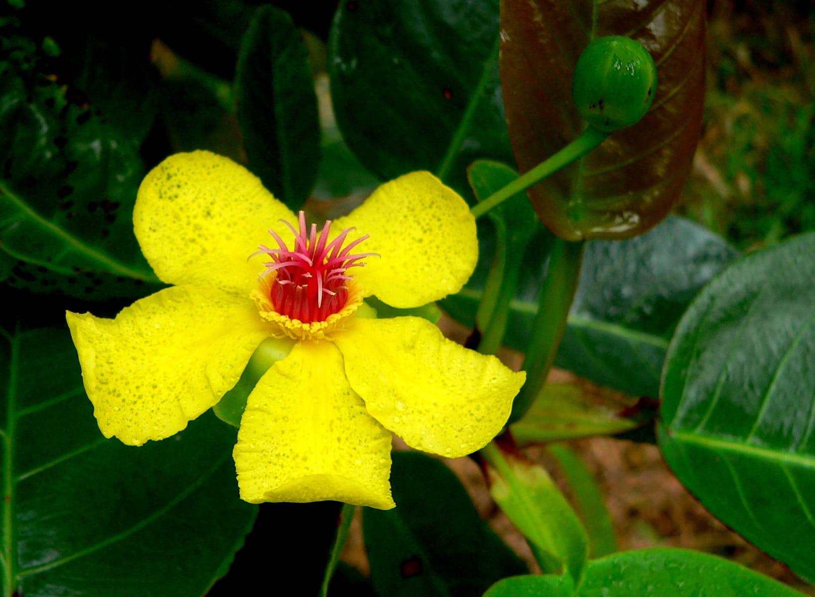Фото цветков с побегами
