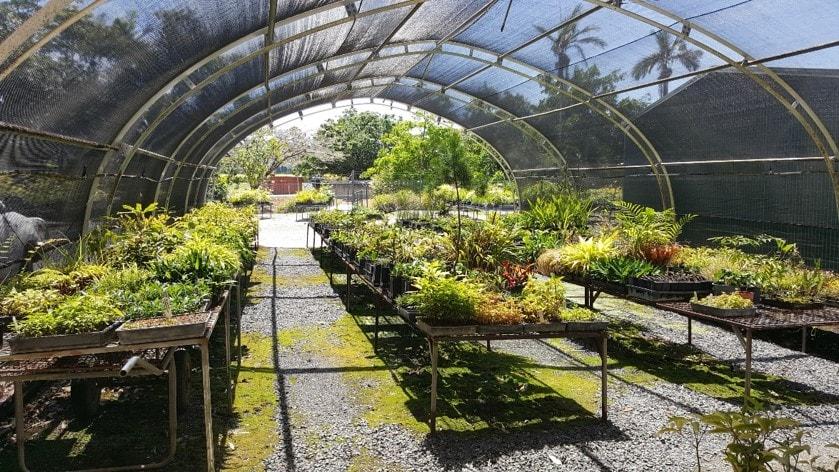 Mossman Nursery 2