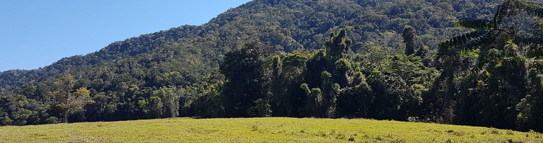 Community group to manage Daintree project