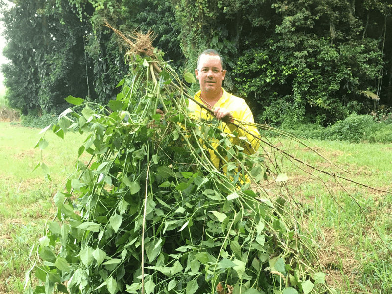Biosecurity team member with Siam Weed