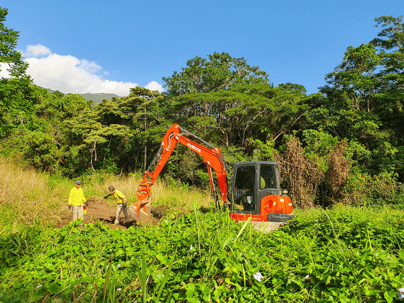 Excavator removing Thunbergia in the Whyanbeel Valley