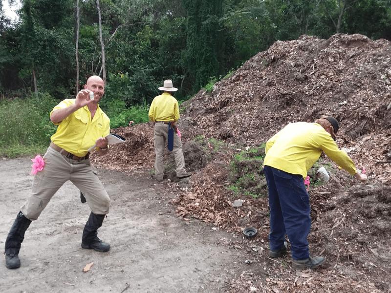 Luring Electric Ants at Killaloe