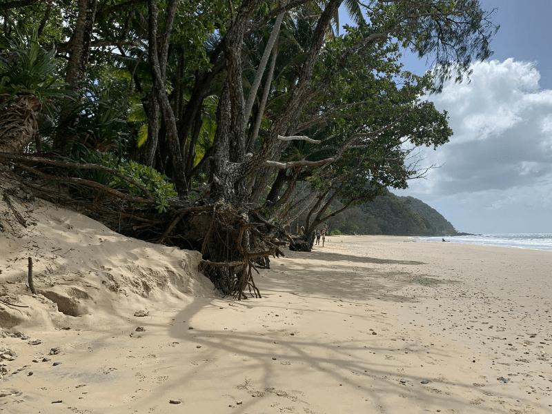 Cow Bay Beach Erosion
