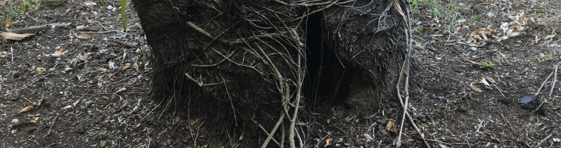 Tree works notification – Multiple locations on Port Douglas Rd