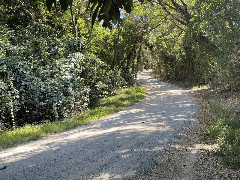 Donovan Range, north of Cape Tribulation