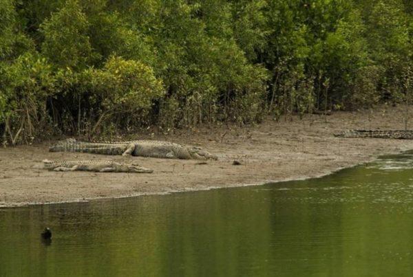 Mowbray River