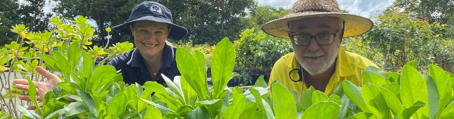 Green Recovery Sprouts at Mossman Nursery