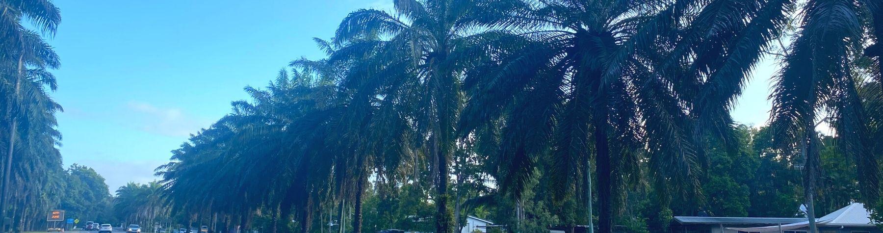 Plan for multi-million-dollar avenue of palms