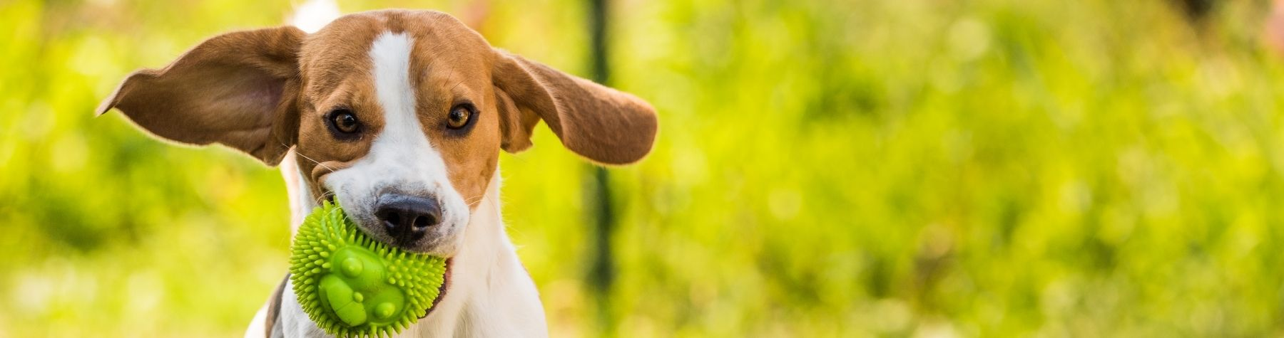 'Go Fetch' and Register Your Dog